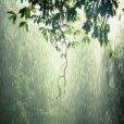Rainology
